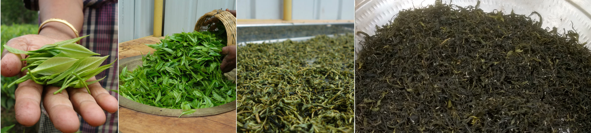 Green Tea Process